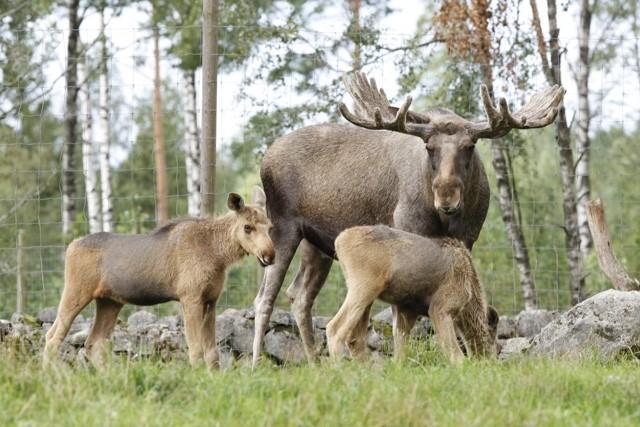 naturlig bordell små nära Jönköping
